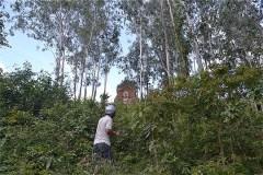ようやく金塔  (Tháp Phú Lốc)が見えてきた