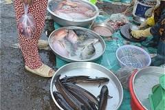 コントゥム市路上マーケットで売っている魚介類