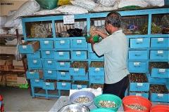 チャウドッ伝統医学の診療所ク市郊外 Suburb of tp.Chau Doc(nui Sam の西側)