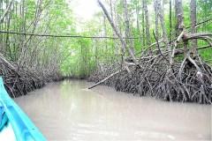 カマウ岬マングローブの森をスピードボートでまわる