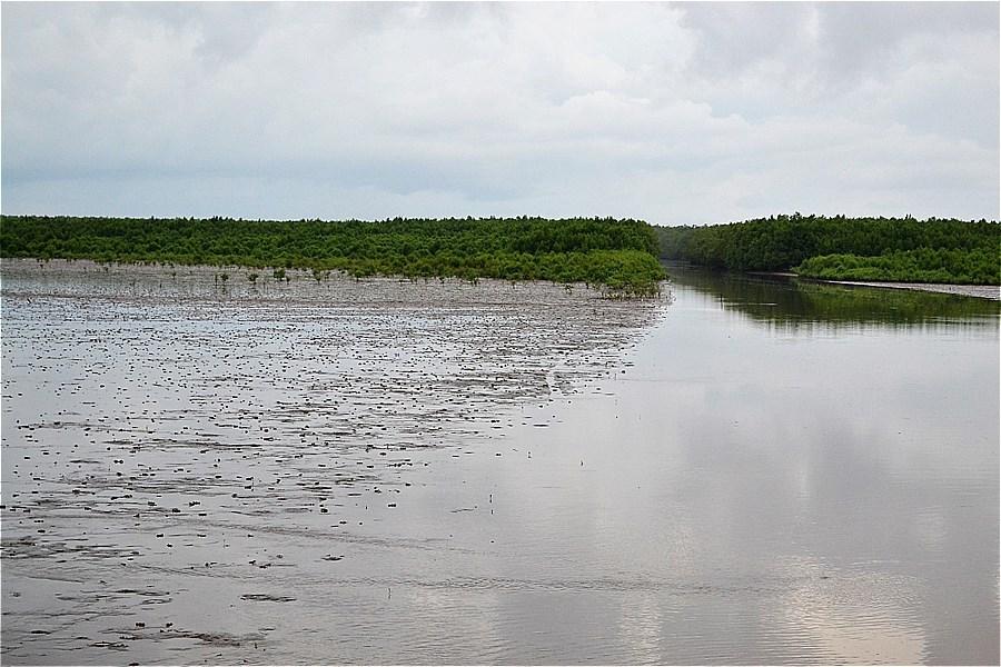 カマウ岬;干潟(bãi bồi ĐẤT MŨI)の生きもの