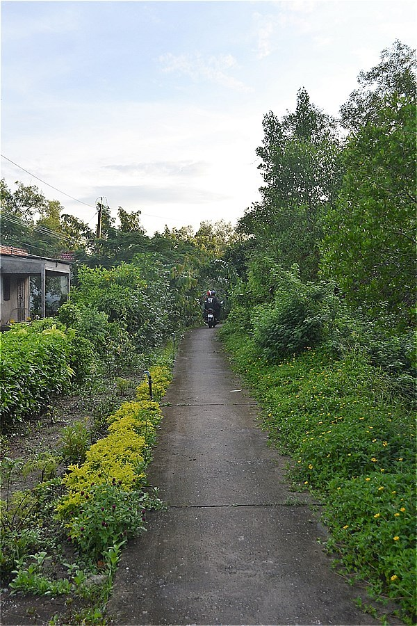 ホームステイ(Điểm Homestay Du lịch sinh thái Cộng Đồng Đất Mũi Tư Ngãi)の前の道路