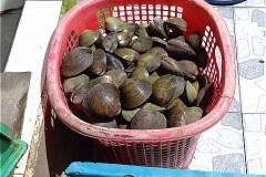 ホームステイ(Điểm Homestay Du lịch sinh thái Cộng Đồng Đất Mũi Tư Ngãi)の食材