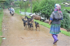住居から出てきたおばさんが、ヤギたちを追っていく